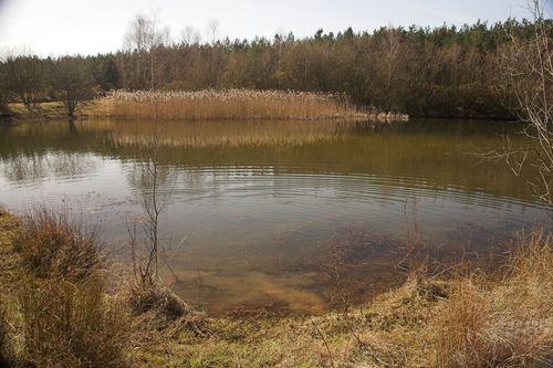 Pond #1-1