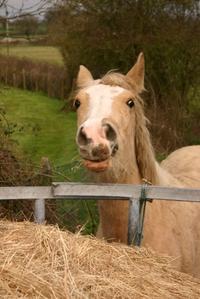 Friendly_horse_img_2084_4