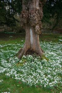 Welford_park_tree_1
